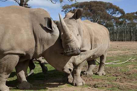 Monarto Zoo - Attractions Sydney