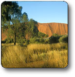 Uluru - Kata Tjuta National Park - Attractions Sydney