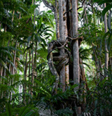 Rainforest Skywalk - Attractions Sydney