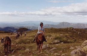 High Country Horses - Attractions Sydney