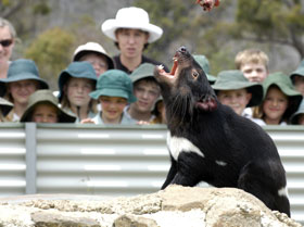 Tasmania Zoo - Attractions Sydney