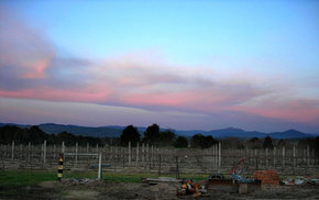 Buller View Wines - Attractions Sydney