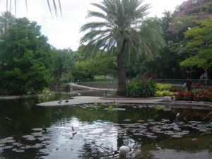 Brisbane City Botanic Gardens - Attractions Sydney