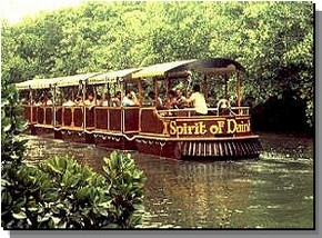 Daintree Rainforest River Trains - Attractions Sydney