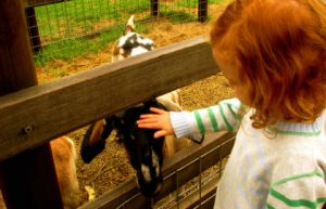 Collingwood Children's Farm - Attractions Sydney