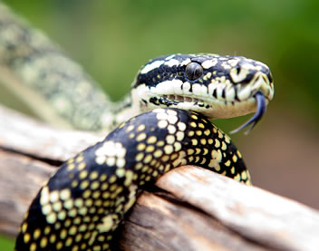 Reptile Encounters - Attractions Sydney