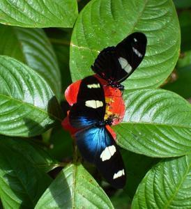 Butterfly Farm - Attractions Sydney