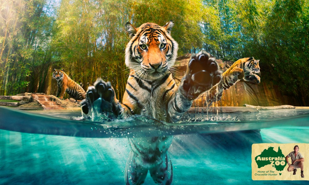 Australia Zoo - Attractions Sydney