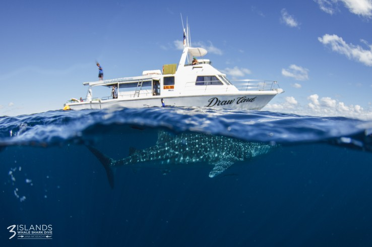 Three Islands Whale Shark Dive - Attractions Sydney