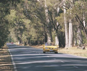 Ludlow Tuart Forest - Attractions Sydney