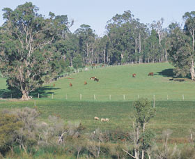 Scenic Drives - Bunbury Collie Donnybrook - Attractions Sydney