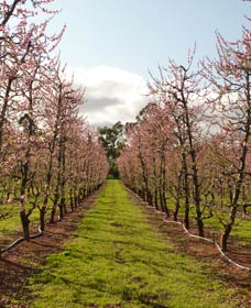 Raeburn Orchards - Attractions Sydney