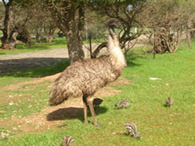 Minlaton Fauna Park - Attractions Sydney