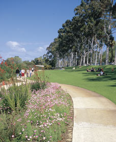 Kings Park Free Guided Walks - Attractions Sydney
