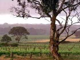 Yangarra Estate Vineyard - Attractions Sydney