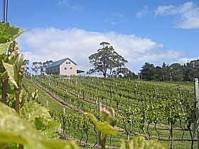 Bruny Island Premium Wines Bar and Grill - Attractions Sydney