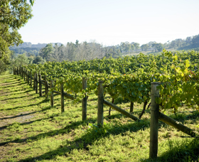 Surveyor's Hill Vineyards - Attractions Sydney