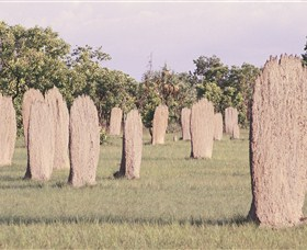 Magnetic Termite Mounds - Attractions Sydney