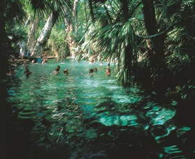 Mataranka Thermal Pool - Attractions Sydney
