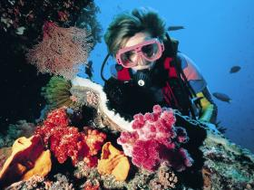 Cook Island Dive Site - Attractions Sydney