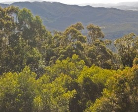 Conondale National Park - Attractions Sydney