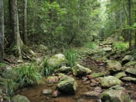 Amamoor State Forest - Attractions Sydney