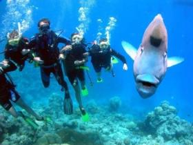 Jew Shoal Dive Site - Attractions Sydney