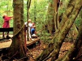 Mary Cairncross Scenic Reserve - Attractions Sydney