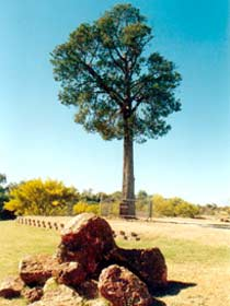 Robbers Tree - Attractions Sydney