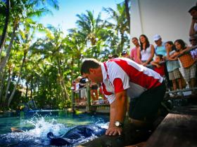 The Living Reef on Daydream Island - Attractions Sydney