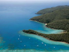 Butterfly Bay - Hook Island - Attractions Sydney