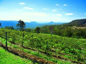 Preston Peak Wines - Attractions Sydney