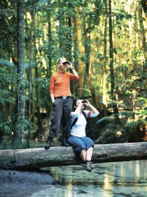 Birdwatching on the Fraser Coast - Attractions Sydney