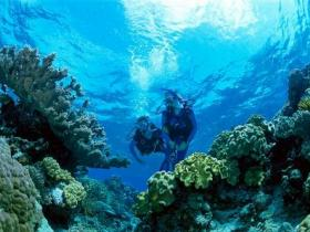 Coral Gardens Dive Site - Attractions Sydney
