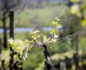 Elan Vineyard and Winery - Attractions Sydney