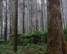 Kinglake National Park - Attractions Sydney