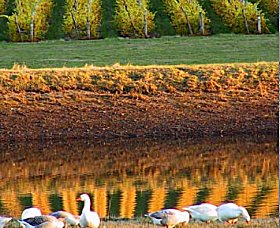 Pipers Brook Vineyard - Attractions Sydney