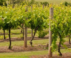 Mt Coghill Vineyard - Attractions Sydney