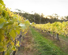 Harcourt Valley Vineyards - Attractions Sydney