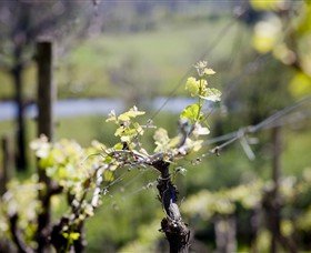 Whistling Eagle Vineyard - Attractions Sydney