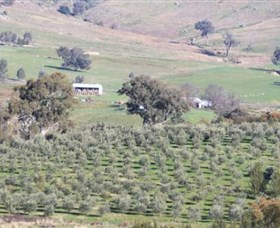 Wymah Organic Olives and Lambs - Attractions Sydney