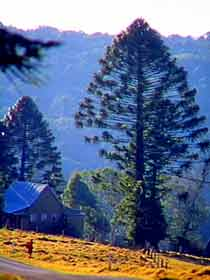 Bunya Mountains National Park - Attractions Sydney
