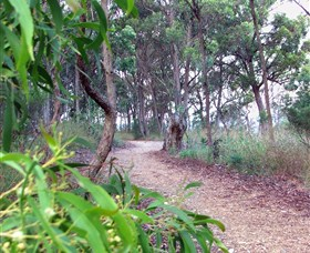 Mount Mutton Walking Trail - Attractions Sydney