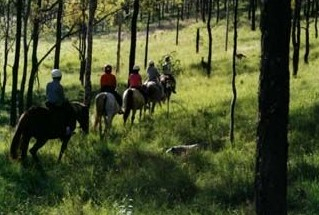 Hunter Valley Horse Riding and Adventures - Attractions Sydney