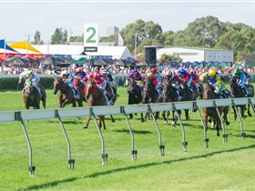 Morphettville Racecourse - Attractions Sydney