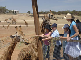 Monarto Open Range Zoo - Attractions Sydney