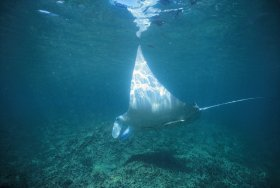 Manta Ray Bay Dive Site - Attractions Sydney