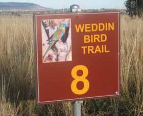 Weddin Bird Trails - Attractions Sydney