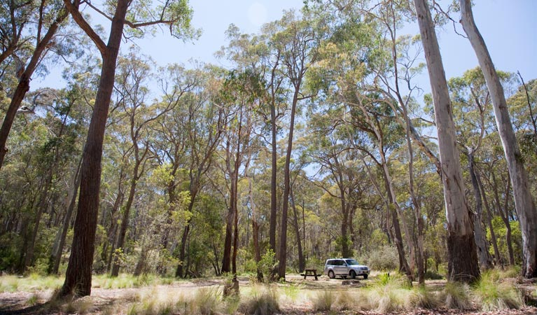 Coolah Tops National Park - Attractions Sydney