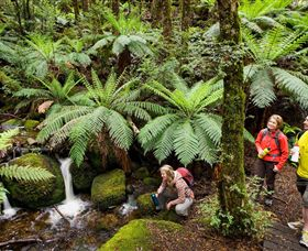 Baw Baw National Park - Attractions Sydney